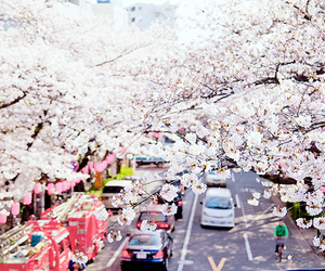 japan, cherry blossom, and flowers image