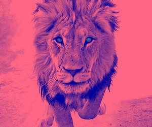 lion, animal, and pink image