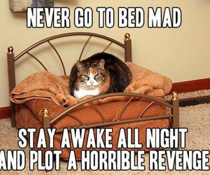 cat, funny, and revenge image