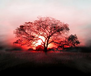 tree, nature, and red image