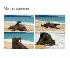 summer, elephant, and cute image