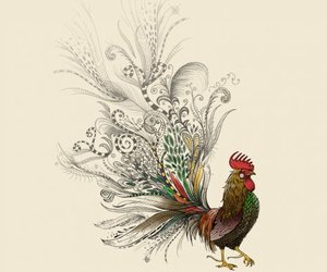 rooster and doodle image