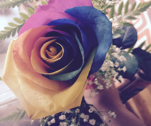 color, rose, and colorful rose image