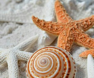 beach, ocean, and shell image