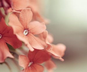 background, flowers, and garden image