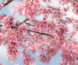 bloom, flowers, and nature image