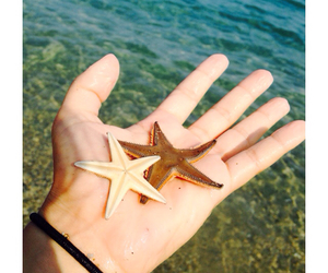 italy, summer, and seastars image