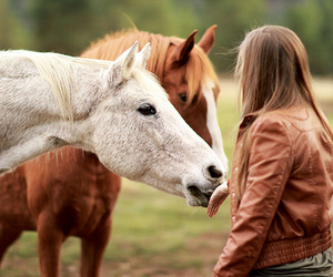 hand and horse image