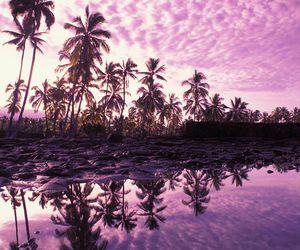 palms and purple image