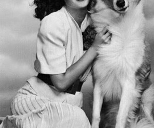 black and white, classic, and dog image