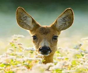 baby animals, cute animals, and deer image