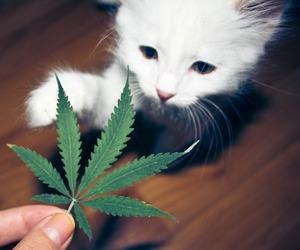 cat, weed, and marijuana image