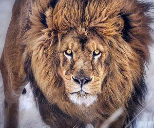 amazing, animals, and cat image