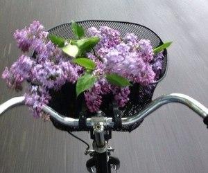 flowers, bike, and purple image