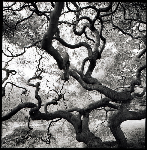 bark, black and white, and branches image