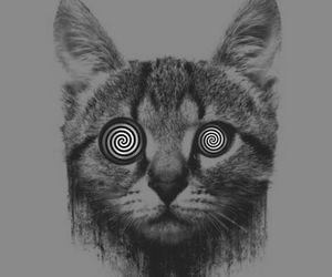 cat, grunge, and trippy image