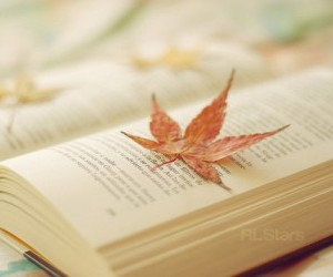 autum, leaves, and book image