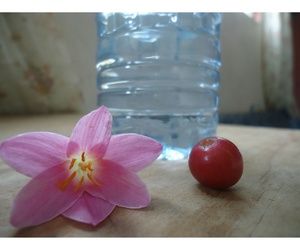 agua, flowers, and pic image