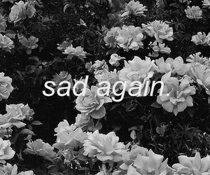 flowers, rose, and sad image