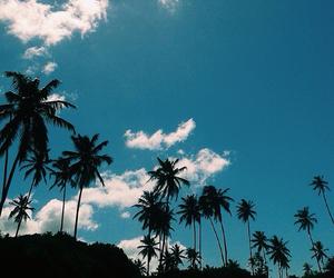 palm tree, palms, and sky image