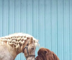 dog, horse, and animals image
