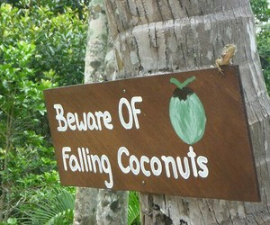 coconut and beware image