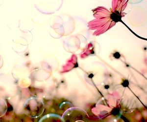 bubbles, nature, and red image