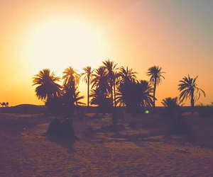beautiful, palms, and sunset image