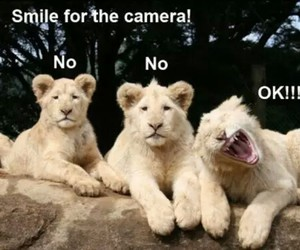 lion, funny, and smile image
