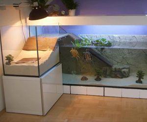 turtle, aquarium, and water image