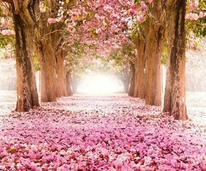 pink, flowers, and trees image