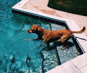 dog, turquoise, and summer image