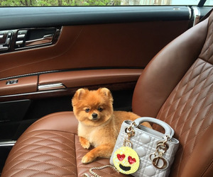 cute, dog, and luxury image