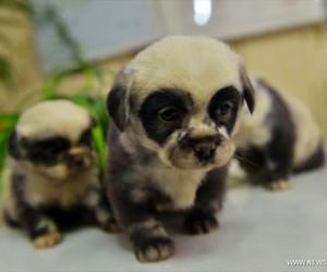 dog, puppy, and panda image