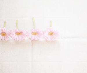 pastel, flowers, and pink image