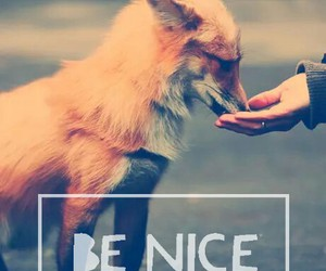 animals, quote, and love image