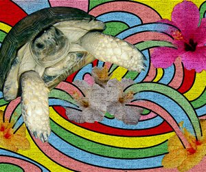 flower, psyco, and turtle image