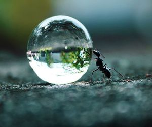 animals, ant, and water image