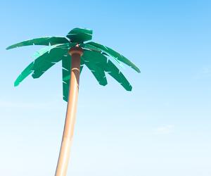 blue, macys, and palm tree image