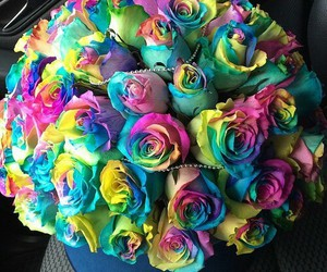 flowers, roses, and rainbow image