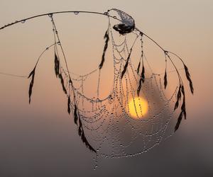 photography image