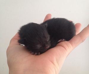 animals, wish, and babycat image