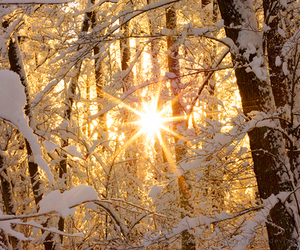 snow, winter, and sun image