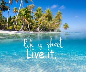 beach, life, and sea image