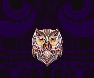 animals, owl, and colors image