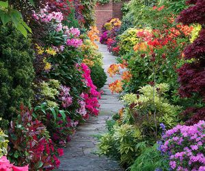 flowers, garden, and spring image