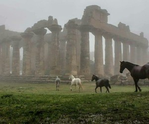 horse, Libya, and architecture image