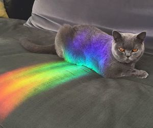 cat, rainbow, and animal image