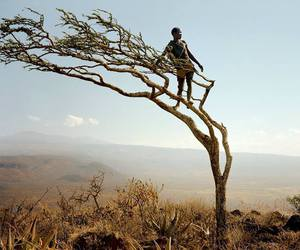 africa and tree image