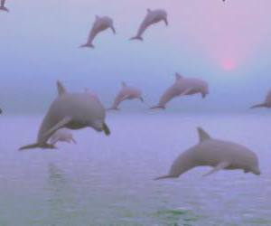dolphin, pale, and pink image